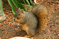 Lightmatter wild squirrel.jpg