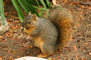 300px Lightmatter wild squirrel Unplanned Events