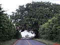 Linda árvore cobrindo a rodovia, perto da fazenda de laranja da Cutrale. rodovia Vicinal Motuca-Rincão - panoramio.jpg