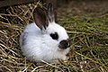 Little rabbit in the forestry zoo.jpg