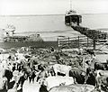 Loading cattle on to the 'Wankuo' at Frances Bay (PH0795-0005).jpg