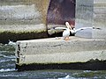 Lock and Dam 13 - Mississippi River 14.jpg