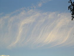 Cirrus fibratus clouds pictured against the sky