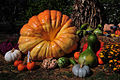 Longwood pumpkins and gourds.jpg