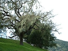 Lopez Lake Tree3.jpg