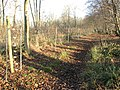 Lower Wood Nature Reserve - keeping out the deer - geograph.org.uk - 1614928.jpg