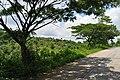 Lubigan Barangay Road - panoramio (12).jpg