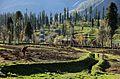 Lush Green Valley of Arang Kel, Azad Kashmir, Pakistan.jpg