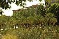 MADRID A.V.U. JARDIN-PARQUE PEÑUELAS PALMERAS - panoramio - Concepcion AMAT ORTA… (3).jpg