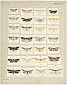 MA I437893 TePapa Plate-XXXII-The-butterflies full.jpg