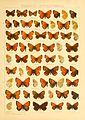 Macrolepidoptera01seitz 0159.jpg