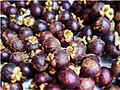 Mangosteen fruit - ugly on the outside, but so, so sweet inside - Flickr - GeorgeTan ^2...thanks for millionth support.jpg