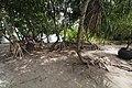 Mangrove Forest Olango Island Sanctuary.jpg