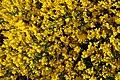 Mani ziedi My flowers - panoramio (1).jpg