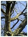 March Denzlingen - Master Season Rhine Valley Photography - panoramio (9).jpg