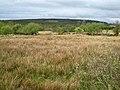 Marshy land at Doogary - geograph.org.uk - 1652974.jpg