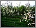 May Spring - Master Habitat Rhine Valley Photography 2013 - panoramio (5).jpg