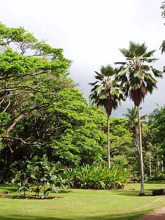 McBryde Garden - McBryde Garden.