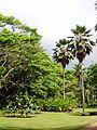 McBryde Garden, Kauai, Hawaii - general view.JPG