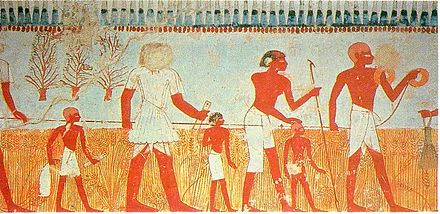 Measuring and recording the harvest is shown in a wall painting in the tomb of Menna, at Thebes (Eighteenth Dynasty). Measure and Harvest005.jpg