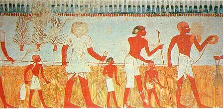 Measuring and recording the harvest is shown in a wall painting in the tomb of Menna, at Thebes, Egypt (Eighteenth dynasty). - Ancient Egypt