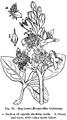 Medicinal Herbs Poisonous Plants-131-76.png