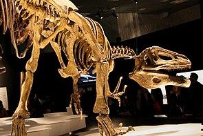 Skelettrekonstruktion von Megaraptor namunhuaiquii