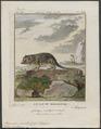 Microcebus pusillus - 1773-1807 - Print - Iconographia Zoologica - Special Collections University of Amsterdam - UBA01 IZ19700075.tif