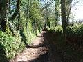 Mid Devon , Uphill Track - geograph.org.uk - 1253375.jpg