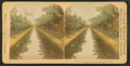 Mirror view, banana plantation, Hawaiian Islands, by Strohmeyer & Wyman.png