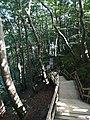 Mons Klint Treppen.jpg