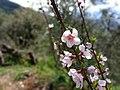 Montagne , Jijel , Algérie.jpg