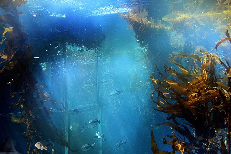 800px-Monterey_peces_14.JPG