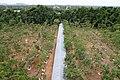 Monywa-Po Khaung-24-Aussicht vom Turm-Buddhas mit Schirm und Baum-gje.jpg
