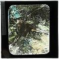 Moose (S2004-921 LS).jpg