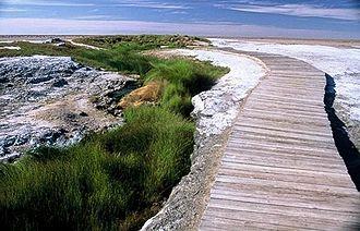 Oodnadatta Track - Image: Moundspring