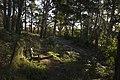 Mount Wilson NSW 2786, Australia - panoramio (9).jpg