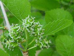 Reproduccion asexual de las plantas para primaria sibiu