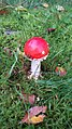 Mushroom on Swedish forest floor 6.jpg