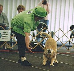 Musical canine freestyle 1.jpg