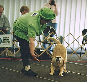 Musical canine freestyle - A dog and handler perform in a musical freestyle competition