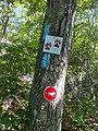 Narragansett Trail blazes with Lantern Hill and Loop Trail signs.jpg
