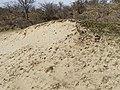 Nationaal Park Kennemerland (41370136451).jpg