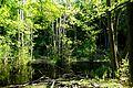 Nationalpark Jasmund - Modderstubben (7).jpg