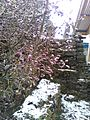 Natural flower1.jpg