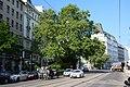 Naturdenkmal 764 2014-05-02 (4) Wien08 Alserstrasse47 Platane GuentherZ.JPG