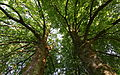 Naturdenkmal Linden.jpg