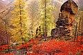 Nature in Khanty-Mansiya.jpg