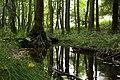 Nature reserve Libouchecké rybníčky in summer 2014 (18).JPG