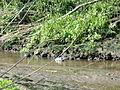 Naturschutzgebiet Heuckenlock 21.05.2014 Phase 81.JPG